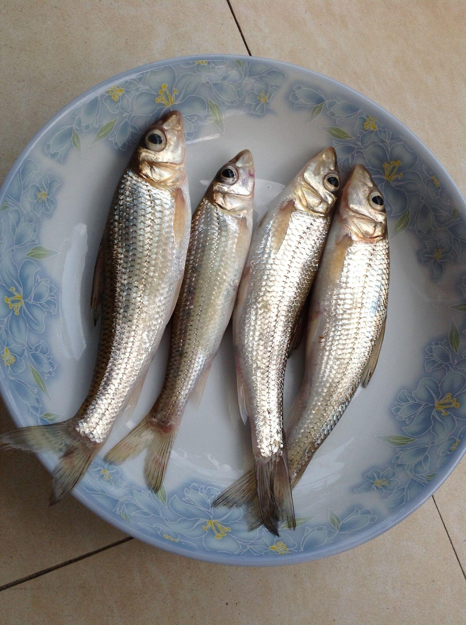淡鱼类大全名称图片_淡水鱼种类图片 _排行榜大全