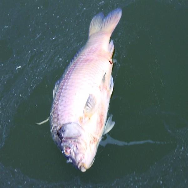哪些因素会导致水产动物中毒及防范措施